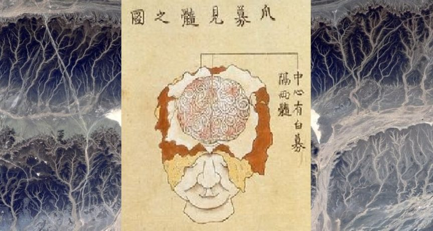 Short history of the Chinese term for 'nerve'